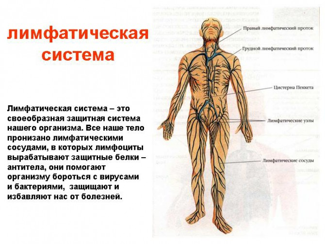 Стадии лимфомы