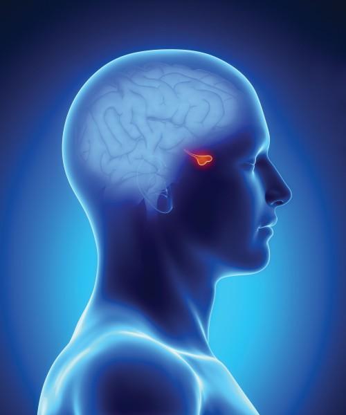 Аденома гипофиза: признаки и лечение народными средствами