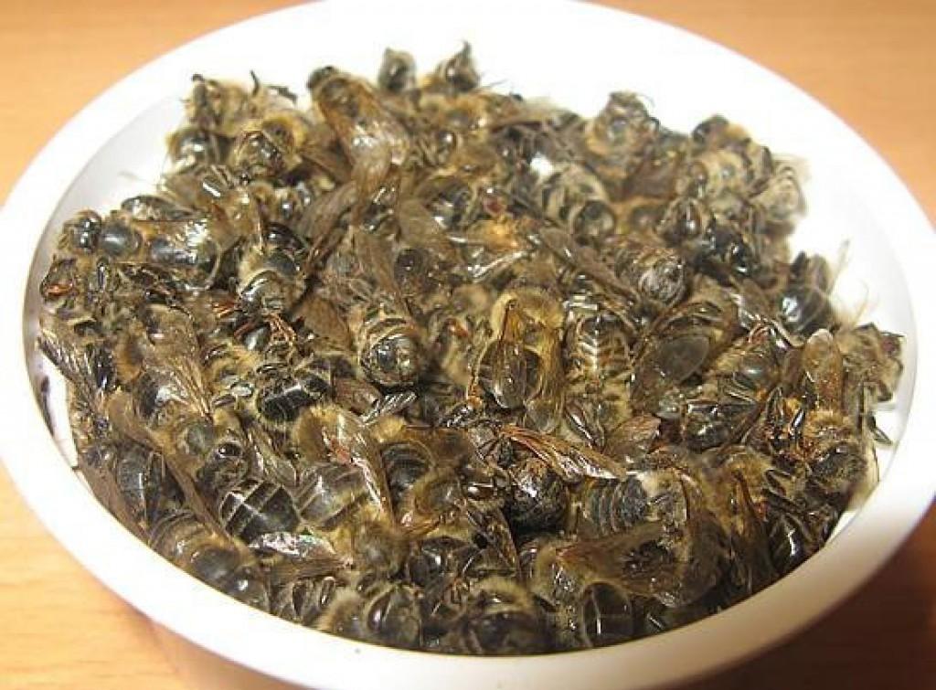 Лечение пчелиным подмором простатита