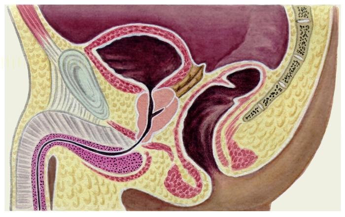 Простатит и сперма ничем
