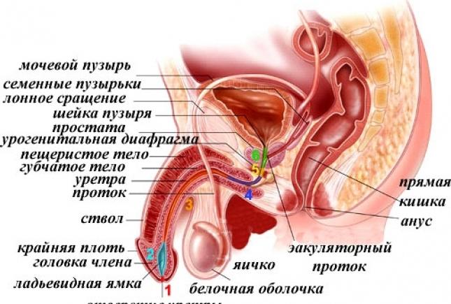 лекарство от простатита быстродействующее у мужчин