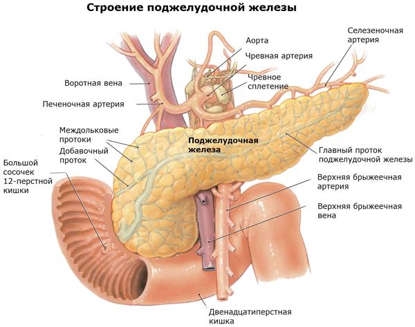 Доброкачественная опухоль поджелудочной железы симптомы