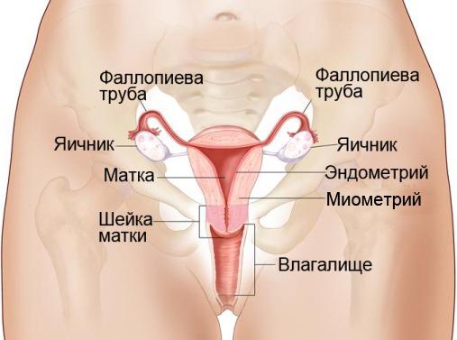 Карцинома шейки матки