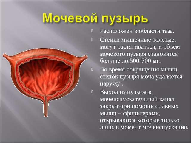 Что такое бластома мочевого пузыря?