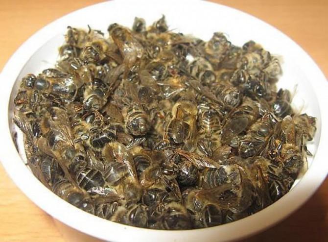Лечение простатита пчелиным подмором